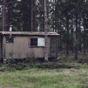 Cabin Feber
